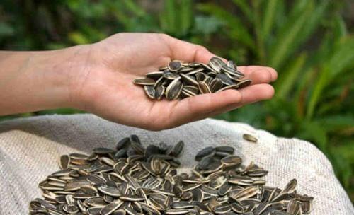 Горсть семечек для кормящих грудью