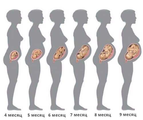 Как растет плод на протяжении девяти месяцев беременности