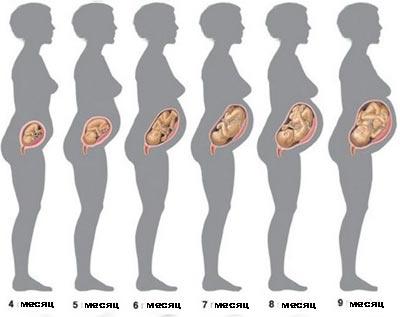 фото как выглядит живот на 4 месяце беременности